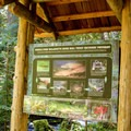 Learn about bull trout from the interpretive sign at the Indigo Springs Trailhead. - Indigo Springs Campground
