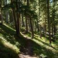 The PCT leading back toward Summit Lake.- Diamond Peak, Marie + Rockpile Lakes