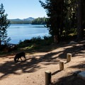 One of three campsites in the Summit Lake Campground.- Summit Lake Campground