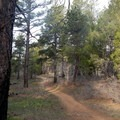 Pine trees provide welcome shade in the heat of the day.- North Guardian Angel Climb