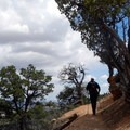 The occasional tree brings a little shade to the exposed trail.- Under-the-Rim Trail to Hat Point