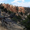 The hoodos with their balancing hats are visible beyond the stump, up the trail.- Under-the-Rim Trail to Hat Point