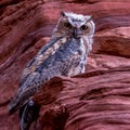 The owls are wary but seem comfortable with people in their canyon.- Rattlesnake + Owl Canyons