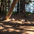 Typical backcountry campsite.- Summit Lake