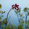 Unidentified species (help us identify it by providing feedback).- Summit Lake