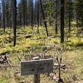 The burn scar from the 2011 Shadow Lake Fire extends to near the trailhead.- Patjens Lakes Trail