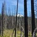 One of the first views of Mount Washington (7,795') from the trail.- Patjens Lakes Trail