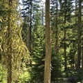 Pockets of the trail escaped the 2011 wildfire.- Patjens Lakes Trail