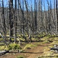 Some incredible reminders of the 2011 blaze.- Patjens Lakes Trail