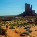 The Wildcat Trail is a great opportunity to walk among the giants.- Wildcat Trail Hike