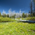 Meadow habitat at Three Creek Meadow Campground.- Three Creek Meadow Campground + Horse Camp