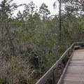 Boardwalks thread through the park's pygmy forest.- Van Damme State Park