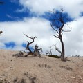 In this barren landscape, trees struggle to survive.- Fairyland Loop
