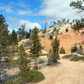 Along the Rim Trail, larger pine trees help to hold the soil in place.- Fairyland Loop