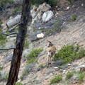Always keep an eye open for wildlife, you might see some deer.- Fairyland Loop