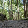 The trail makes use of former logging roads along with recently cleared trail.- Kwis Kwis Trail