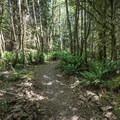 - Kwis Kwis Trail