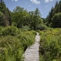 A bridge crosses a wetland pond.- Kwis Kwis Trail