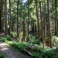 Kwis Kwis Trail, Lewis and Clark National Historic Park.- Kwis Kwis Trail