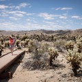 The Cholla Cactus Garden is a great stop for families. Be sure curious children don't touch the cactus, however.- Cholla Cactus Garden