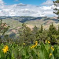 Wildflowers and mountain views--that's Colorado!- Animas Overlook Trail