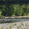Floaters on the Skykomish River.- Skykomish River, Al Borlin Park