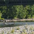 Floaters on the Skykomish River.- Skykomish River, Al Borlin Park