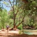 The trail beside the creek is lined with trees.- Havasu Falls Hike via Havasupai Trail