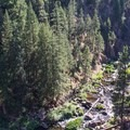 Downstream from Middle Falls on the McCloud River.- Middle Falls