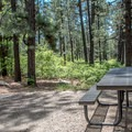 Most sites have a great view of the woods.- Junction Creek Campground