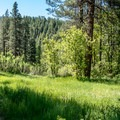 Sunny meadows alternate with ponderosa pine forest- Junction Creek Trail, Colorado Trail