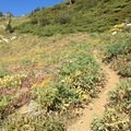 Wildflowers line the path up to Seven Up Pass.- Granite Lake + Seven Up Pass