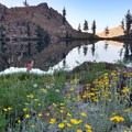 Morning reflections with wildflowers.- Stonewall Pass + Echo Lake