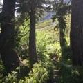The trail through a carpet of ferns.- Bear Lakes