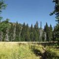 North Catherine Meadow.- North Catherine Creek Trail + Cartwheel Ridge Loop