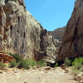 The canyon walls inch closer as hikers approach The Narrows.- Grand Wash Trail to The Narrows