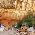 Various rock layers and mineral deposits color the rock.- Grand Wash Trail to The Narrows