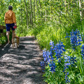 There is a short paved trail leading from the campground to a view above the lake.- Silver Jack Campground