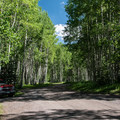 An avenue of aspens.- Silver Jack Campground