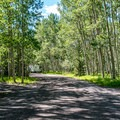 It is hard to describe how beautiful the campground roads are.- Silver Jack Campground