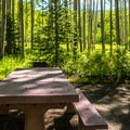 Most sites at Silver Jack Campground have excellent views of the surrounding woods.- Silver Jack Campground