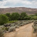 """A view of the """"N"""" in the hills above the Miner's Trail.- Evans Canyon/Miner's Trail Loop"""