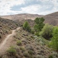 Trail paralleling Evans Creek.- Evans Canyon/Miner's Trail Loop