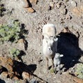 If you're lucky, you might catch a glimpse of bighorn sheep.- Volcano Peak