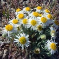 In this seemingly desolate wasteland, pockets of wildflowers thrive.- Volcano Peak