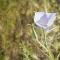 Unidentified species (help us identify it by providing feedback).- Table Rock