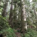 The Boy Scout Trail has minimal elevation gain.- Boy Scout Tree Trail