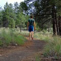 Strolling through the forest as shadows grow longer.- Campbell Mesa Trails