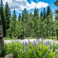 The sites at Jumbo Campground are set among aspens and wildflowers.- Jumbo Campground