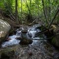 One of several creek crossings along the trail.- Jones Whites Creek Loop
